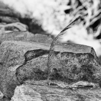 Feather in Stone